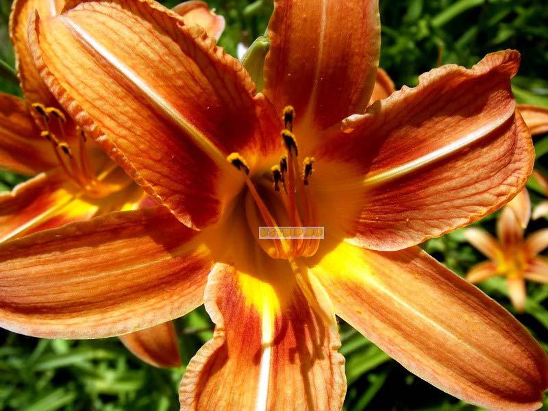 фотографии цветов в Бухаре