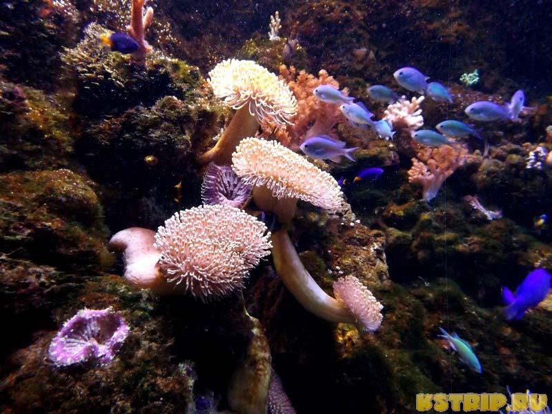 Морские обитатели в океанариуме