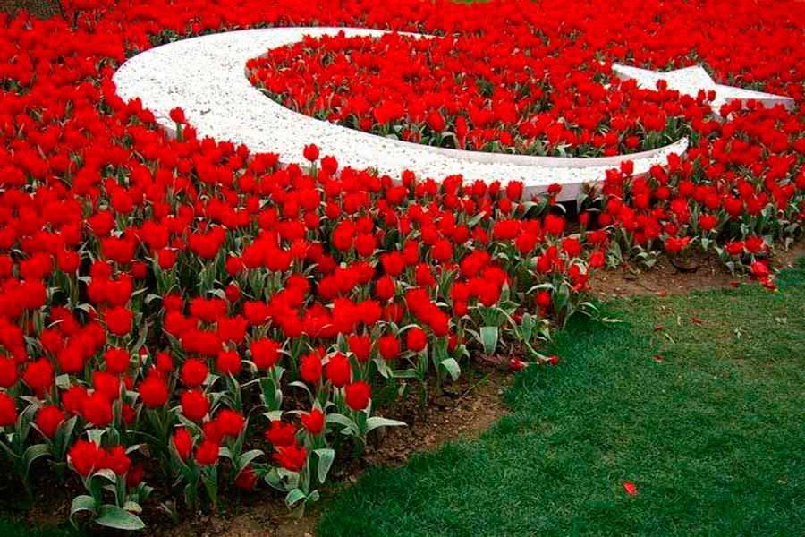 Фото цветы турции
