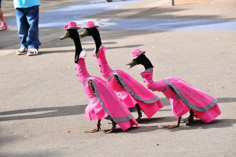 Утиный фестиваль, или Гонки Палио в Сан-Миниато