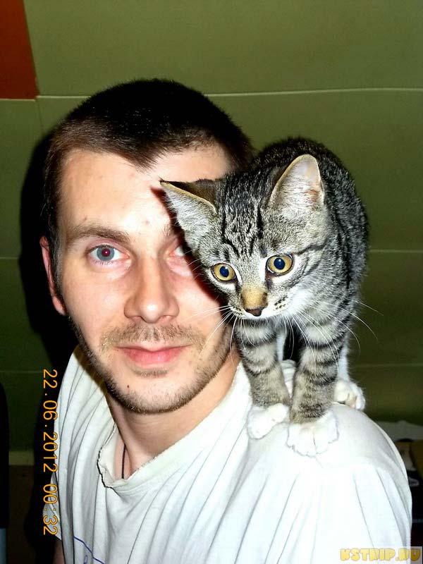 кот Пипс, кот авторов блога kstrip.ru