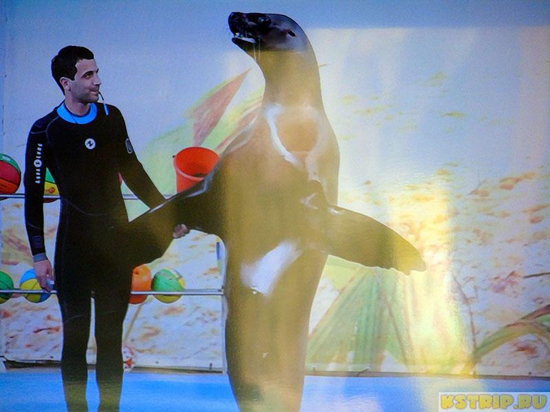 Дельфинарий «Морская звезда» в Лазаревском