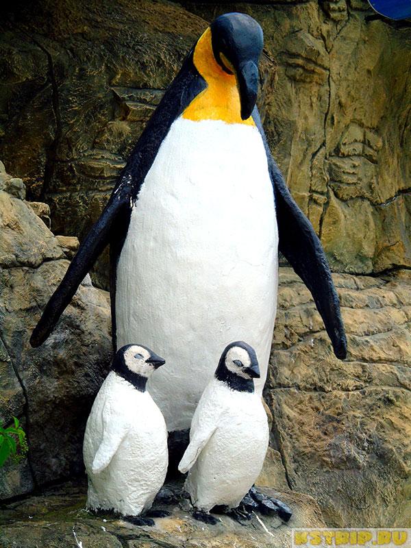 Пингвинарий в парке культуры и отдыха в Лазаревском