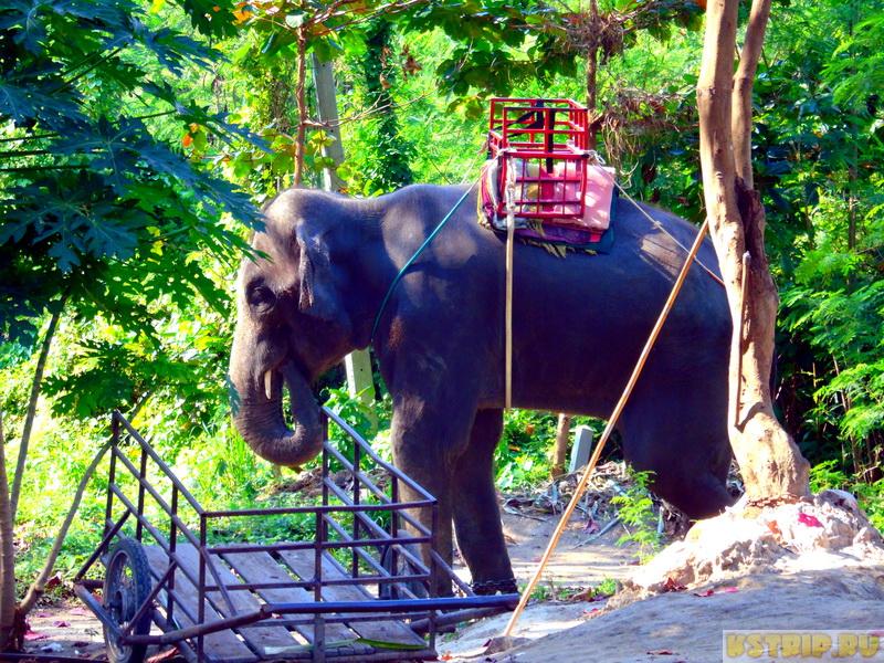Деревня слонов в Хуа Хине