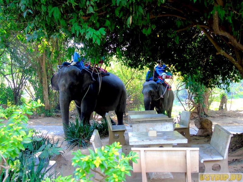 Деревня слонов Elephant Village в Хуа Хине