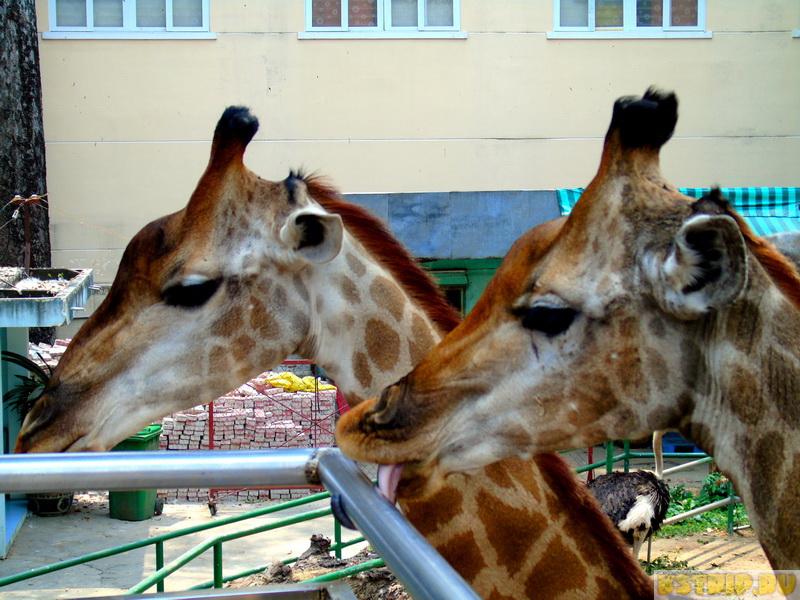 Зоопарк в Хошимине – жирафы, слоны, крокодилы, драконы…