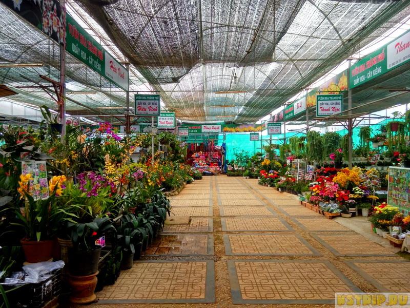 Орхидеи во вьетнаме нячанг фото