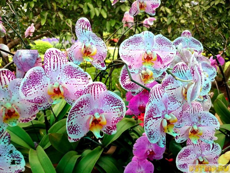 Орхидеи во Вьетнаме