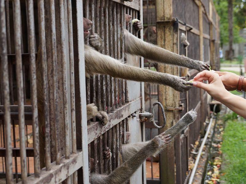 Экскурсии в Сочи: Поездка в обезьяний питомник