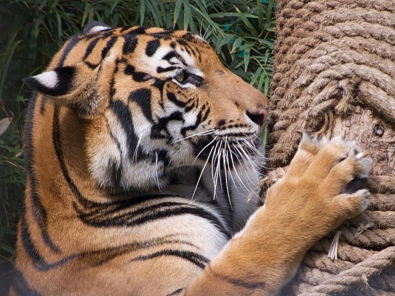 Экскурсии в Бангкоке: В мире животных
