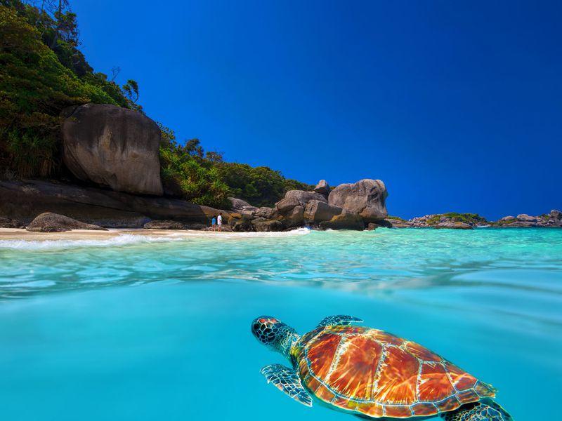 Экскурсии на Пхукете: Пляжи и подводный мир Симиланских островов