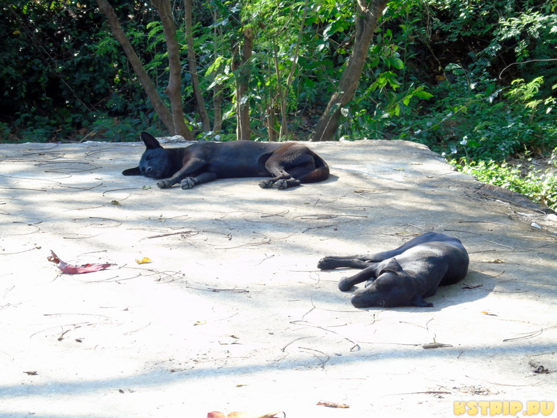 Собаки в Тайланде