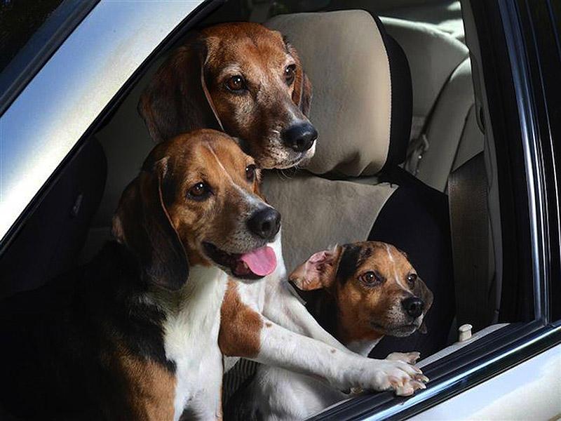 Как перевозить кошку или собаку в автомобиле